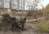 """Горожан возмутила вырубка деревьев в парке """"Дружба"""" (ФОТО, ВИДЕО)"""