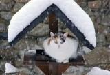 В среду в Новом Уренгое будет тепло и снежно
