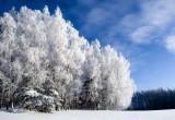 В городе по-прежнему холодно: прогноз погоды на 9 ноября