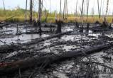 Прокуратура разбиралась в инциденте с разливом нефти в Пуровском районе