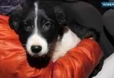Из смертельной западни в теплый дом: в Ноябрьске достали щенка из-под бетонных плит (ВИДЕО)