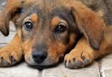 В Новом Уренгое собирают деньги, чтобы прокормить собак