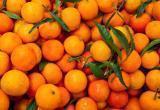Аналитики посчитали, сколько мандаринов на свою премию смогут купить жители регионов: в лидерах северяне