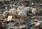 На Ямале наказали нефтяную компанию за организацию свалки