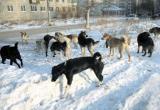 Стая бездомных собак оккупировала местную школу