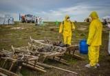 На Ямале неправильно утилизировали трупы животных: в дело вмешалась прокуратура