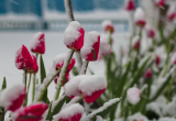 Самый весенний праздник встретит горожан сильным ветром: прогноз погоды на 8 марта