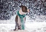 Понедельник будет снежным: прогноз погоды на 11 марта