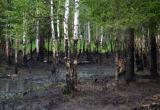Больше 31 миллиона рублей отдаст ямальская нефтедобывающая компания за загрязнение леса