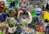 Питоны, крокодилы, тарантулы и лисы: Минприроды обновило список запрещенных домашних питомцев