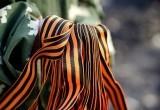 В Новом Уренгое раздают георгиевские ленточки (ФОТО)