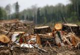 В Надымском районе незаконно вырубали лес, а полиция не спешила возбуждать уголовное дело