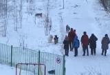 Глава Нового Уренгоя обратил внимание на проблему выгула собак на улицах города (ВИДЕО)