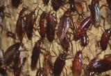 Посетителям «Солнечного» удалось пообедать за одним столом с тараканами (ВИДЕО)