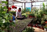 НУР24 побывал в теплицах, где выращивают около 150 тысяч растений, которые украсят город летом (ВИДЕО)