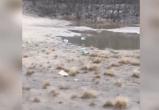 Пиво и газировка: новоуренгойка пожаловалась на заваленный мусором городской пляж (ВИДЕО)