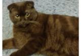 Новоуренгойка угрожала усыпить кошку, чтобы быстрее ее пристроить (ФОТО)