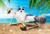 НУР24 запускает видеоконкурс «Лето с приветом»
