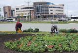 «Озеленение полным ходом»: клумбы газовой столицы начали украшать цветами (ФОТО)
