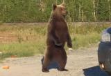 Путешествуя по Ямалу, новоуренгоец встретил и накормил медведя (ВИДЕО)