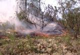 Площадь лесных пожаров на Ямале уменьшилась