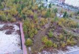 """Выкорчеванные деревья из парка """"Дружба"""" заботливо пересадили горожане (ВИДЕО)"""