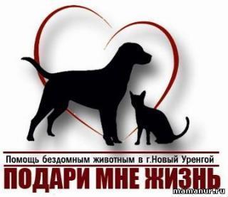 Подари мне жизнь, Центр помощи бездомным животным