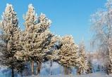 Новая неделя встретит Новый Уренгой потеплением