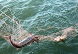 Правоохранители возбудили две «уголовки» за незаконный вылов рыбы на Ямале: в сети к браконьерам попал и краснокнижный вид