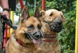 За один день в Новом Уренгое домашние собаки покусали двоих детей