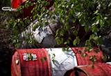 Житель Нового Уренгоя нашел в лесу бочки, полные горючего (ФОТО)