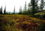 В Приуральском районе в лесу нашли труп женщины