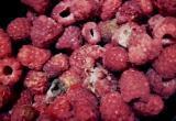 «Плесень по цене малины»: испорченный товар испортил сюрприз новоуренгойца своей жене (ФОТО)