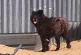 Спасенный из многолетнего заточения пес осваивает территорию новоуренгойского приюта (ВИДЕО)