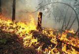 На Ямале сгорело почти 800 гектаров леса