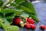 «Покажи свой огород»: НУР24 собирает фото новоуренгойских грядок и огородов