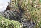 Нехорошие новости из Ноябрьска: жители сообщили о выбросе промышленных отходов (ФОТО)