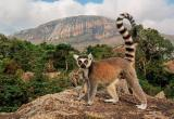 519 лет назад был открыт остров Мадагаскар: этот день в истории