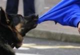 За нападение собак на людей предложили наказывать хозяев животных (ОПРОС)