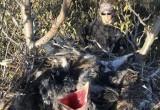Ученые бьют тревогу: из-за людей вороны оккупируют тундру и разоряют гнезда других птиц (ВИДЕО)