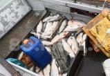 Два жителя Ямала «нарыбачили» на полмиллиона рублей (ФОТО, ВИДЕО)
