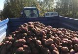 За сезон на Ямале собрали 400 тонн картофеля (ФОТО)