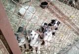 Центр помощи бездомным животным в Новом Уренгое просит помочь новоуренгойцев спасти жизнь щенкам (ФОТО)
