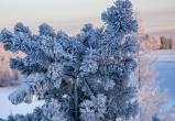 Прогноз погоды в Новом Уренгое на 5 декабря