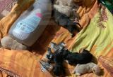 В Надыме новорожденных щенков выбросили на помойку (ФОТО)